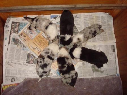 Wheel of Pups!