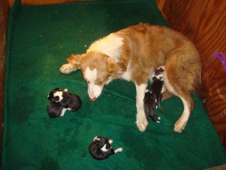 Born 10/3/10- 2 males, 3 females.