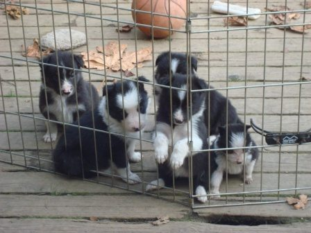 The whole bunch- 4 weeks old