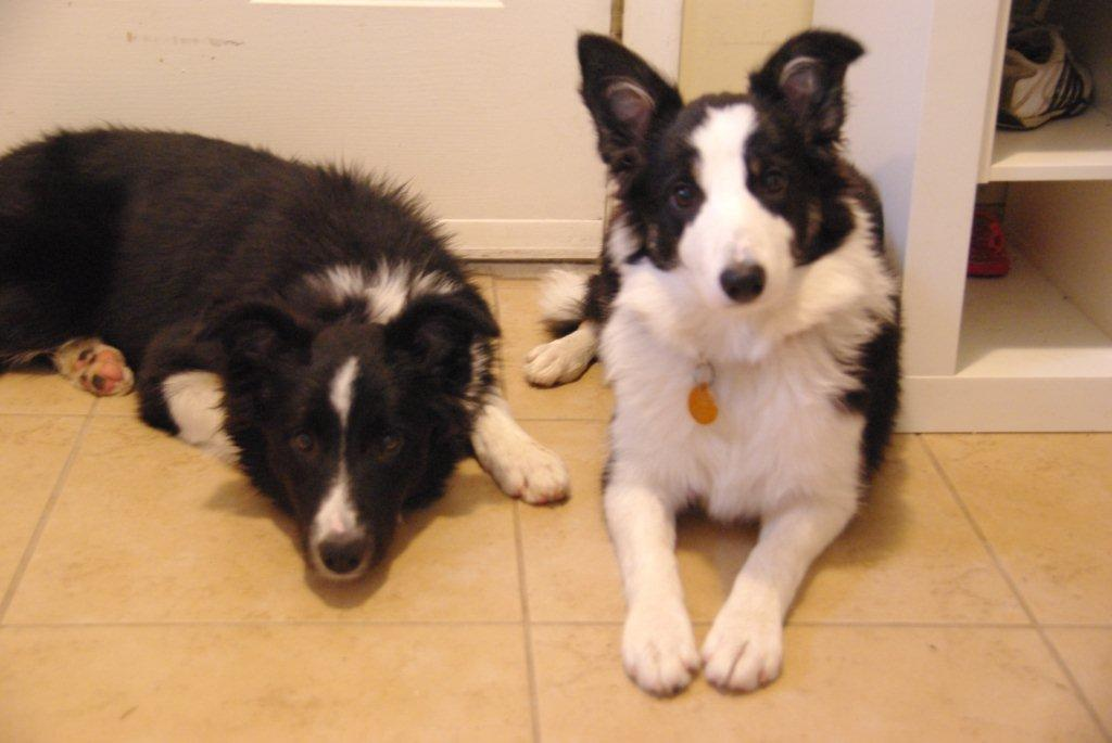 Tess and Lola (5 months old) ~ formerly HoHo & Suzy Q