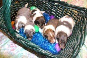 Basket of Joy!